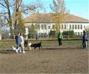 Photo of Rogers Dog Park & Playground - Tacoma, WA